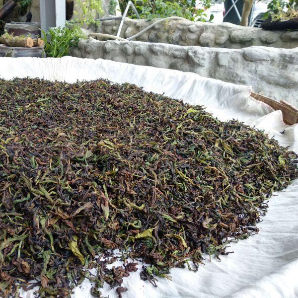 Dark Tea during post fermentation