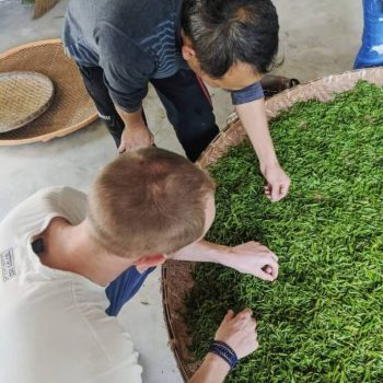 Gregor in Anhui sorting Green Tea