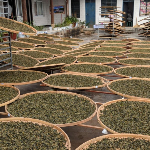 The puerh leaves are sun-dried in Yunnan, China