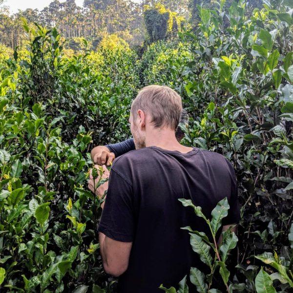 Gregor standing in the black jungle tea