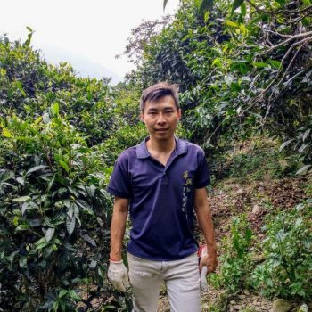 Liu Shifu in the South of Taiwan among old tea trees