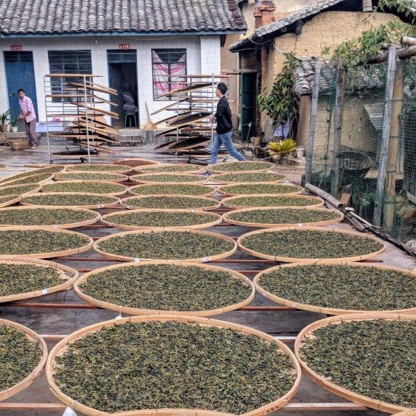 Puerh tea drying in the sun
